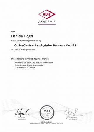 kynologischer basiskurs modul 1